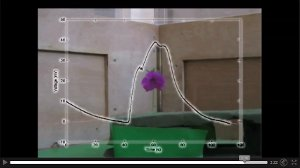 Nähert sich eine Hummel einer Blüte verändert sich die elektrische Aufladung einer Blüte sehr deutlich. Das Bild zeigt einen Ausschnitt eines Videos. Es lässt sich nicht einbinden, hier können Sie es aber abrufen.