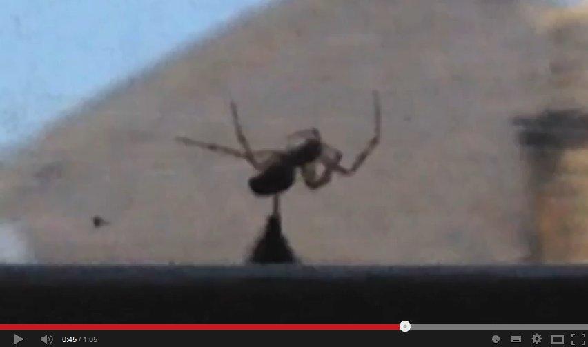 Video: Sticht die Hummel wirklich zu?