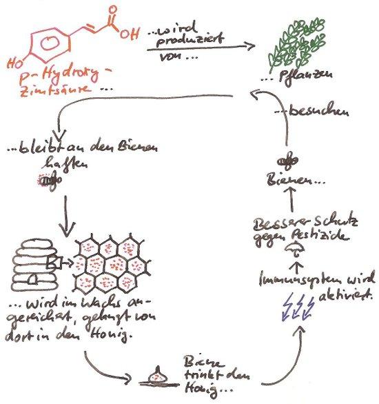 Wirkung von Zuckerlösung auf Bienen, schwächerer Schutz gegen Pestizide