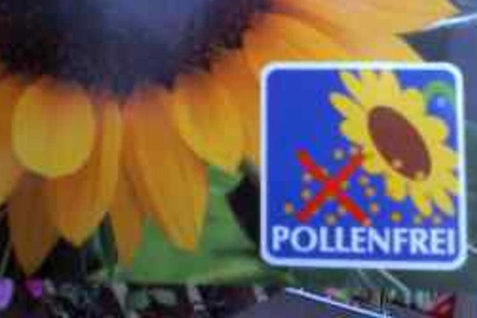 Ssatgut einer Tüte Sonnenblumen, darauf ein Kasten mit der Schrift pollenfrei.