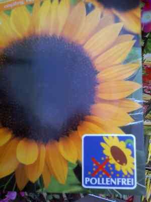 Pollenfreie Sonnenblume Saatgutpackung