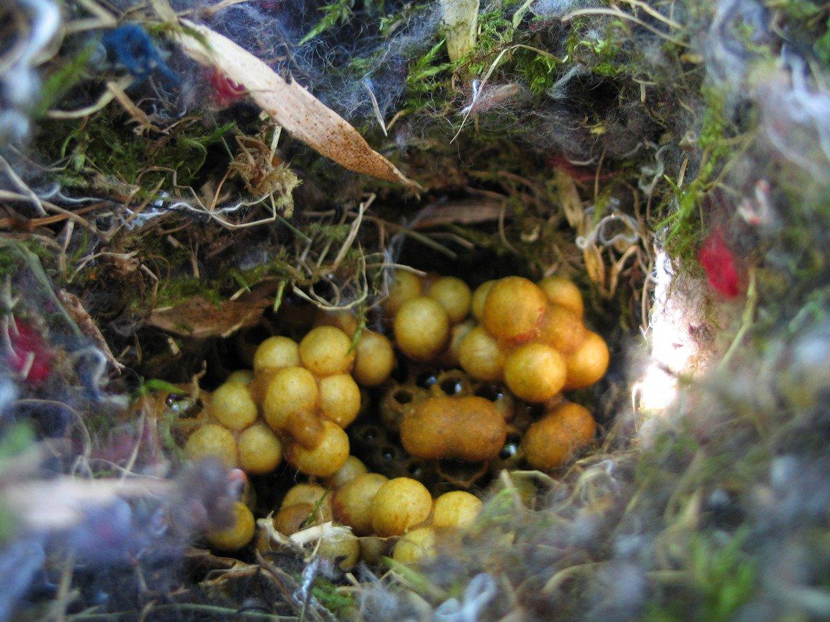 Vergleich von Bienen und Hummeln: Das Nest der Hummeln sieht ganz anders aus.