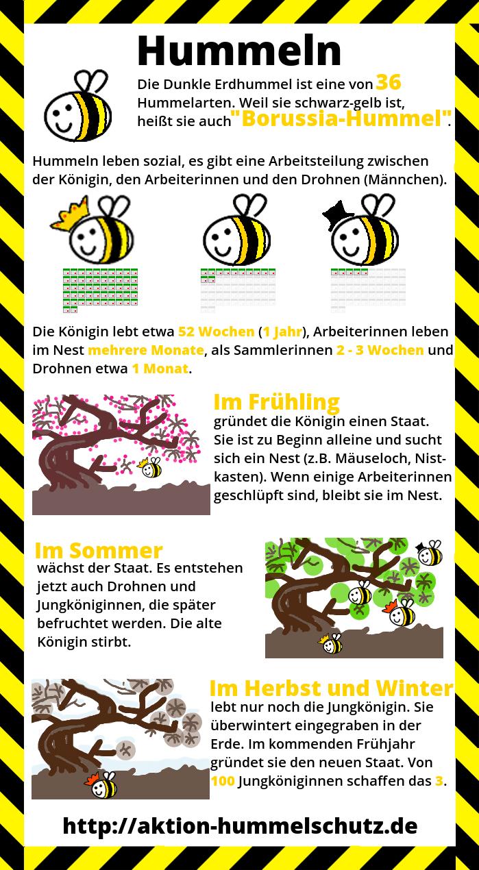 Infografik über Hummeln