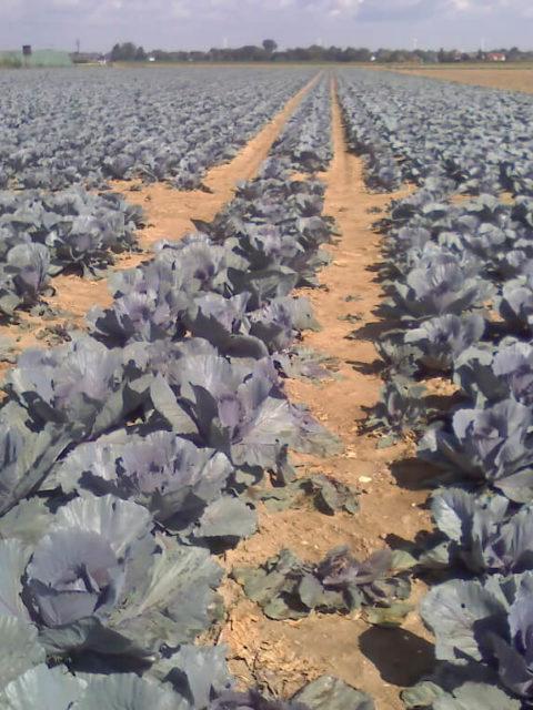 Pestizide sorgen in der Landwirtschaft für die Bekämpfung von Schädlingen. Darunter leider aber auch Hummeln.