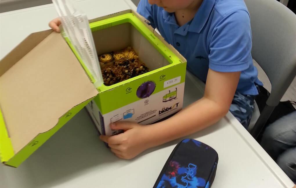 In einer Nestbox lassen sich Hummeln züchten.