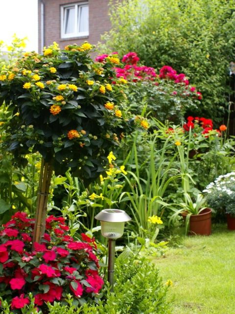 Garten mit vielen Pflanzen, die blühen und großer Rasenfläche.