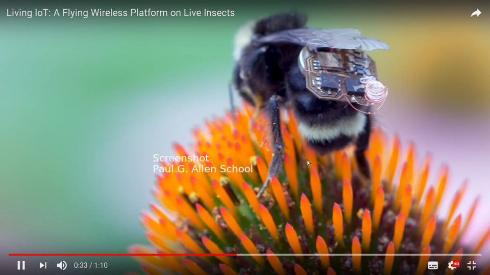 Living Internet of things: Hummel mit elektronischem Bauteil